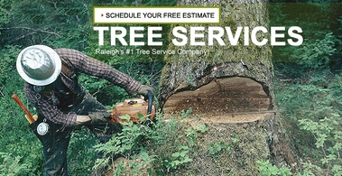 Premiere Tree Services of Raleigh